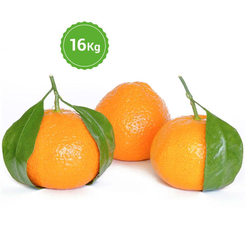Mandarinas 16 kg la mejor naranja de valencia la mejor - Catalogo mandarina home ...